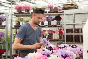 Arranging of the Lathyrus flowers