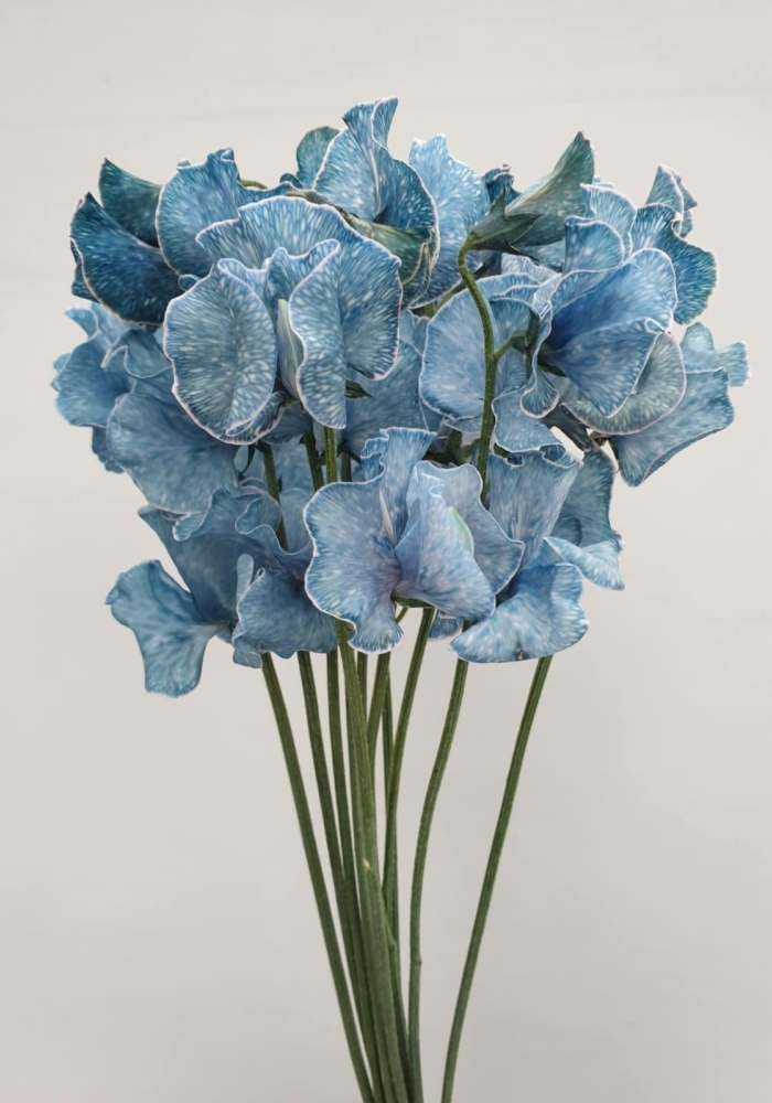 Lathyrus Blue Magic